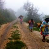 Camino de San José